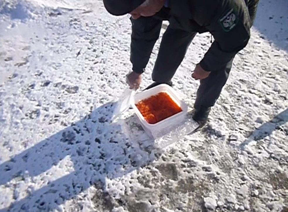 Россельхознадзор предал огню «дрожжевой» контейнер из8 тазиков красной игры